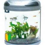 【飼育簡単】アクアリウム初心者にオススメの熱帯魚10種類一覧