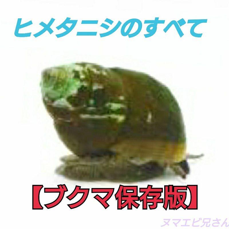 寿命 タニシ 石巻貝は死んだらどうなる?石巻貝が動かない・寿命?