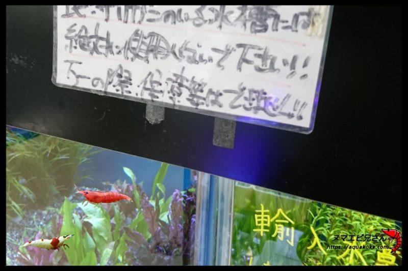 エビ水槽 水草 注意