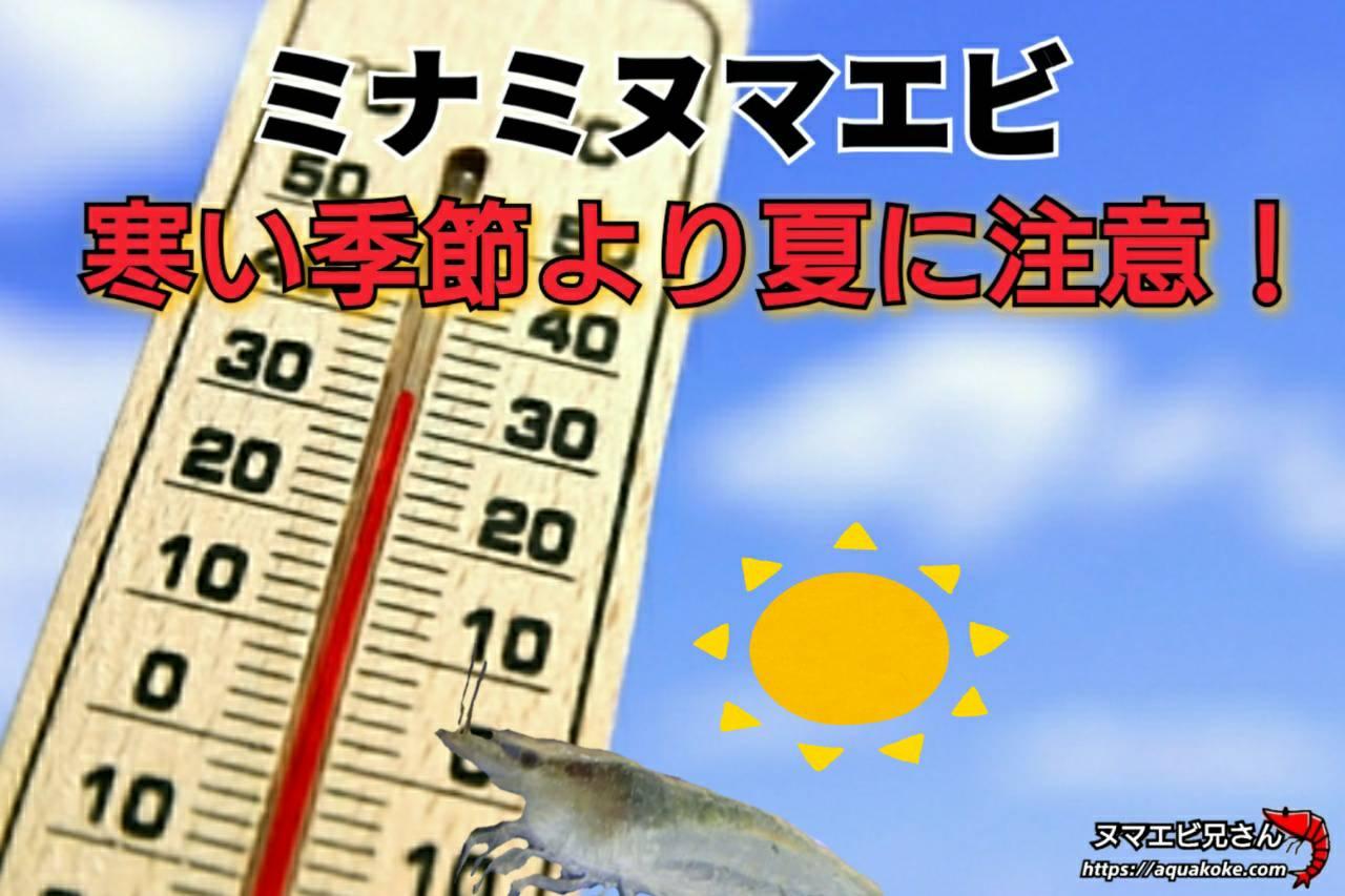 ミナミヌマエビ 高温に注意
